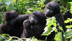 primate-safaris